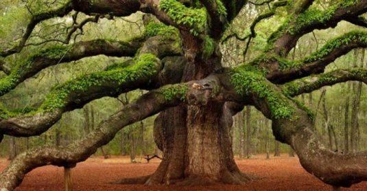 mijn-redding-het-verhaal-over-de-3-bomen-1483269211